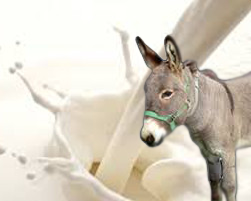 Wagentrailsranch.com - Donkey Milk